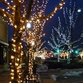 Decorated Main St Trees