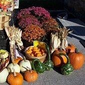 Pumpkins, Apples, Flowers, Gourds