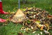 Leaf Collection Program