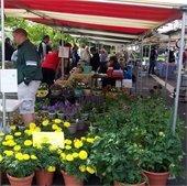 Lisle French Market